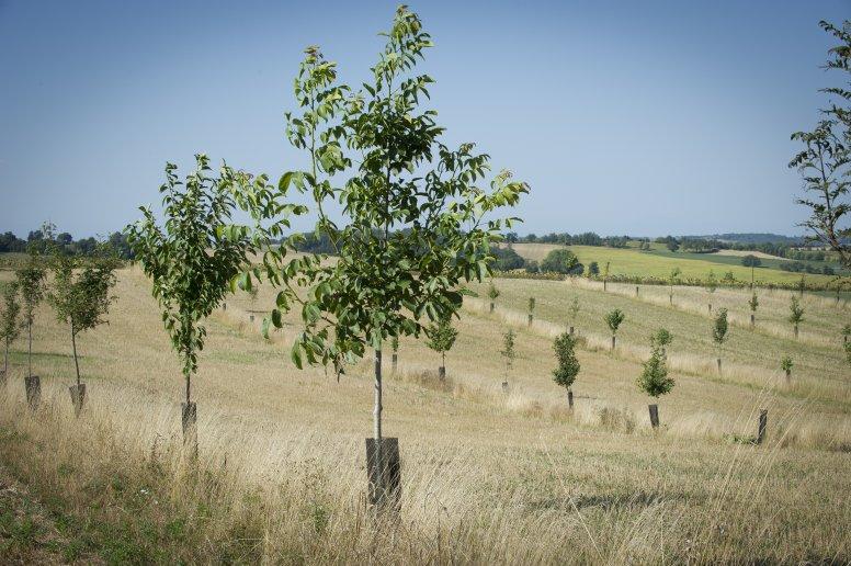 agroforesterie-gers.jpg