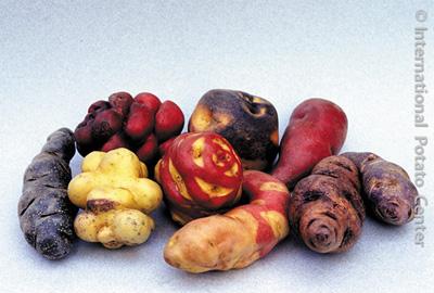 pommes-de-terre-2
