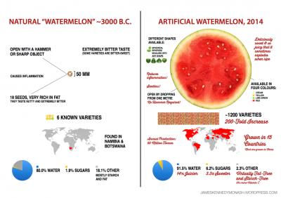 Evolution de la pastèque