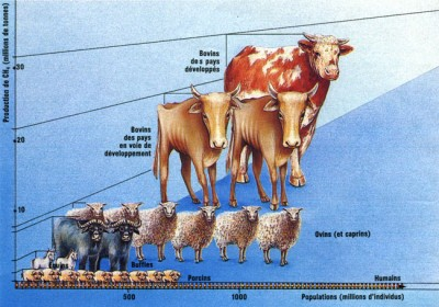 Méthane vache