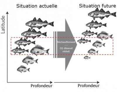 Migration des poissons