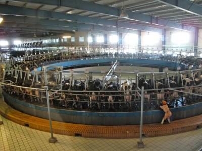 Ferme laitière industrialisée Chine